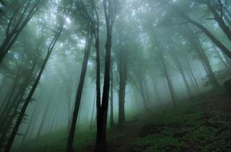 jade-like trees shiver